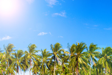 Green palm tree skyline on tropical island. Blue and sunny sky.