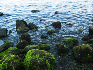 Still sea shore with blue water and stones. Mossy seaweed stones on volcanic beach.