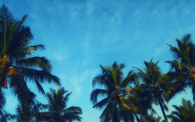 blue sky and clouds with coconut background