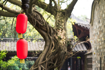 Chinese lanterns with an old tree and a temple in the background
