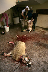 Men slaughter sheep in a building during Eid al-Adha in Sale