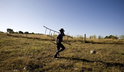 Armenio Nobre runs after stepping on a beehive while stripping cork trees in Odemira