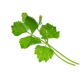 Fresh Celery isolated on white background