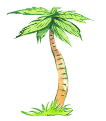 Bright green palm tree growing from a patch of green grass painted in watercolor on clean white background