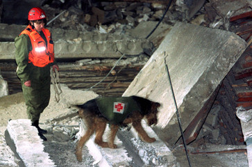 RESCUE DOG SEARCHES THROUGH DEBRIS AT EXPLOSION SITE.