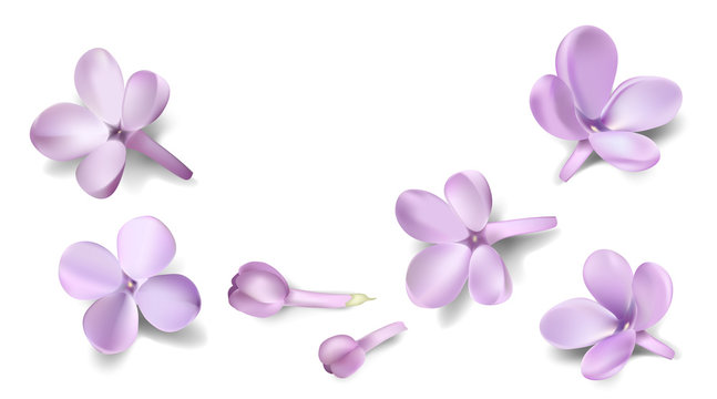 Pastel background with isolated lilac flowers.