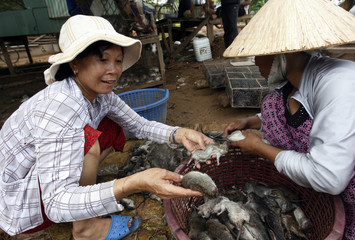 Vietnamese traders examine dead rats before transporting them to Vietnam as food in Chrey Thom district