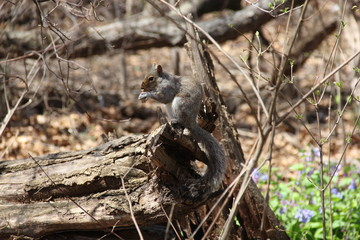 Cute squirrel playing in the park
