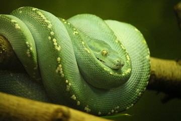 Eine Schlange am Ast