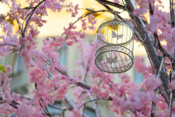 decorative bird cage hanging on a tree