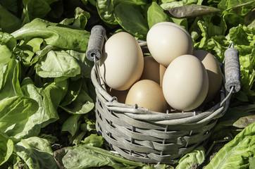 eggs basket in a field of insalad