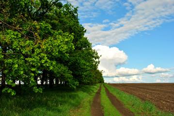 Oaks along the road, plowed field humus, green grass, blue cloudy sky, spring day, Ukraine