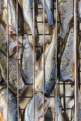 Fresh fish on the grill for frying