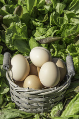 background of salad and eggs in a basket
