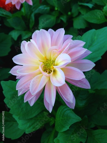 Fleur Rose Pale Blanche Stock Photo And Royalty Free Images On