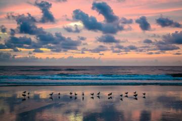 Seagulls in the sunrise on a Florida beach.