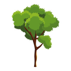 tree foliage trunk branching over white background vector illustration