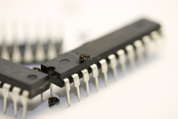 BUG, Real living beetle on microcontrollers and microchips, white background