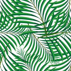 Vector seamless pattern of tropical palm leaves isolated on white background. Vector illustration in hand drawn cartoon style. Can be used for printing on textile or gift wrap and wallpapers.