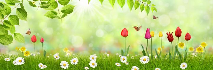 Frühling 443