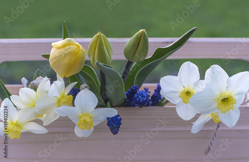 gardening concept yellow tulips and white narcissus flowers in the wooden box outdoors photo. Black Bedroom Furniture Sets. Home Design Ideas