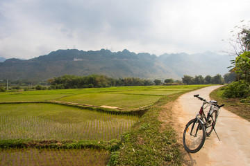 landscape, rice fields in Vietnam