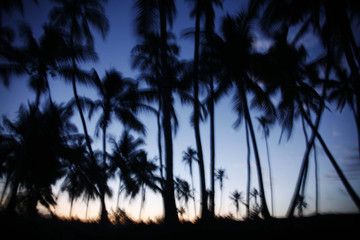 Palm trees sway in the breeze at sunset on the southeast coast of Zanzibar island in Tanzania
