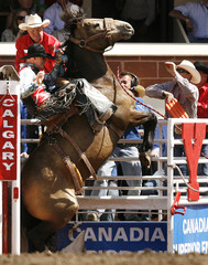Bail hangs on as the horse Kama Jubilee bucks in the chute in the Saddle Bronc event during Saturday's wild card day in Calgary