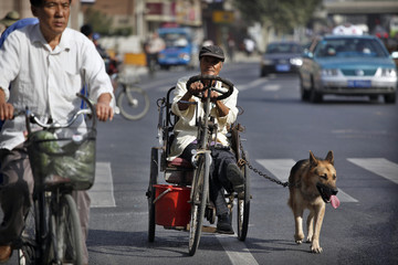 A man uses a dog to pull him on his cart in Shanghai