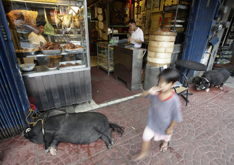 A boy walks past pet pot-bellied pigs sleeping outside a restaurant in Chinatown, Metro Manila