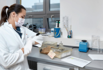 Female scientists handles laboratory mouse