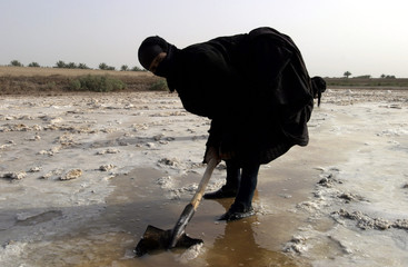 Iraqi women collect salt at a natural salt marsh near Kut, central Iraq, May 15, 2003. The salt depo..