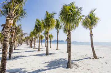 The morning view of the palm tree beach in Ha Long (Halong) bay in Quang Ninh Province, Vietnam. Southeast Asia UNESCO World Heritage Site