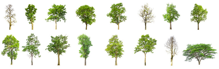 trees isolated on white back ground, tree collections isolated, tree objects