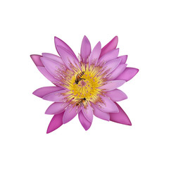 Lotus flower with bees inside cartoon drawing illustrations with clipping path  isolate on white