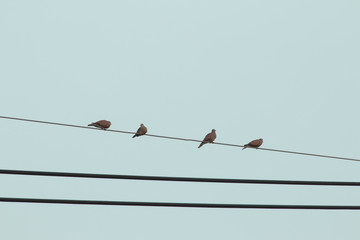 Pigeons on wire with blue sky