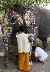 People paint decorative designs on elephant on eve of Rath Yatra