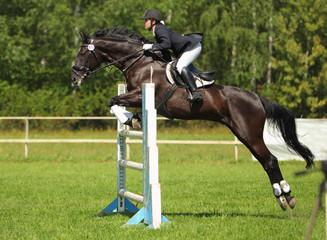 Equestrian girl horseback jumping obstacle