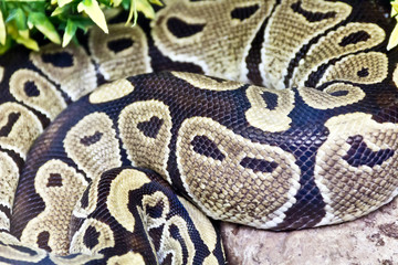 Photo of snake skin close up in zoo