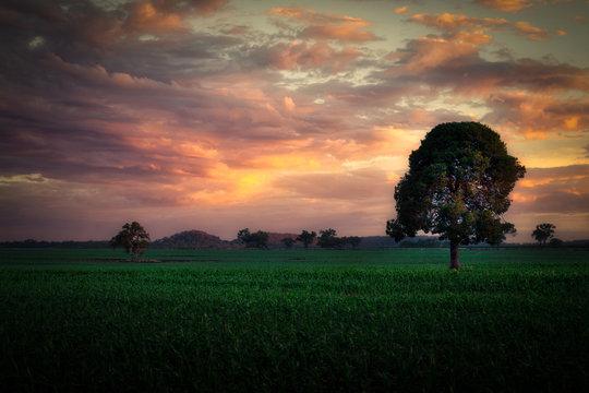 Sunrise over Warwick Country