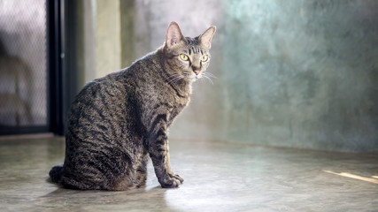 Gray striped cat sitting on a floor.