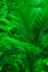 background of a palm tree