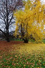 Tree full of yellow flowers
