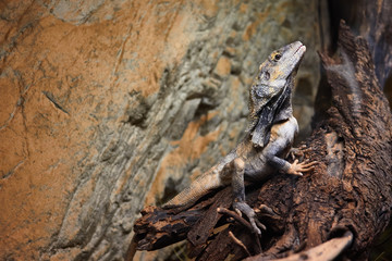 Lizard dragon sitting on a tree on a background of stone texture.