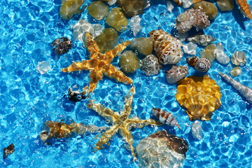 Blue background with seashells.Summer holiday relax background