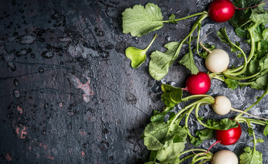 Colorful radishes with green haulm leaves on dark rustic background, top view, place for text. Clean healthy organic vegan or vegetarian food concept