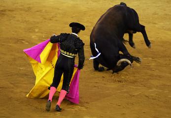 "Spanish bullfighter David Fandila ""El Fandi"" looks at a bull fall during a bullfight in Malaga"