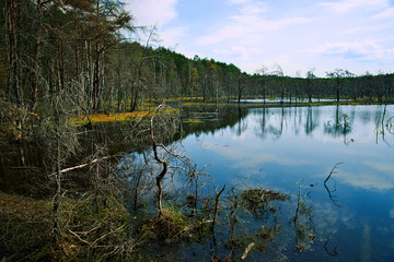 Spring, wetland, pond and forest
