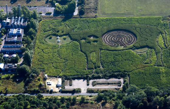 An aerial view shows a labyrinth in the form of a cow that is cut into a corn field in Marienfelde