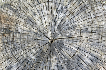 Cross section cut of tree stump with annual rings and fragment texture background